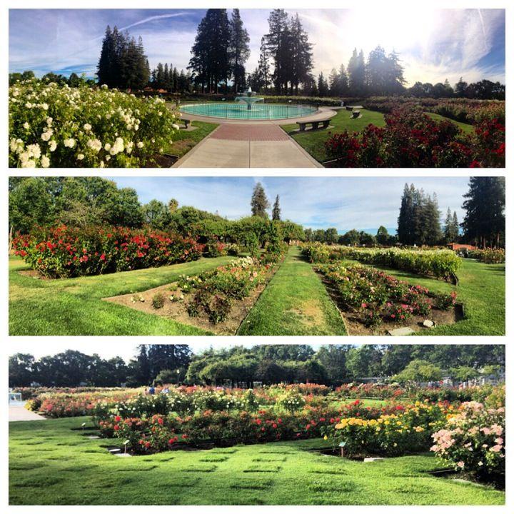 San Jose Municipal Rose Garden San Jose California San Jose California History
