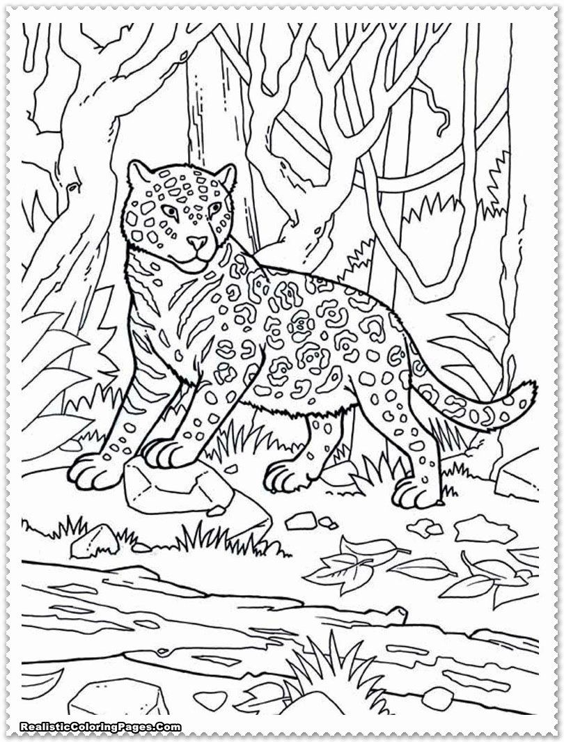 African Animals Coloring Pages Beautiful Realistic Jungle Animals Coloring Pages In 2020 Zoo Animal Coloring Pages Zoo Coloring Pages Jungle Coloring Pages