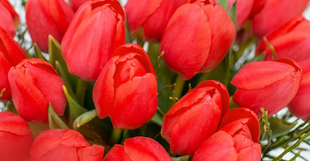 Kalenderwoche 05: 25 Tulpen und ein Bund Heidelbeere