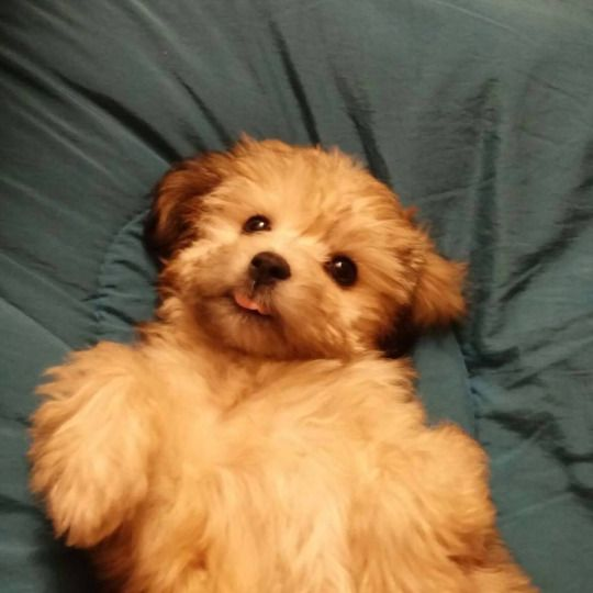 Just got a new puppy!