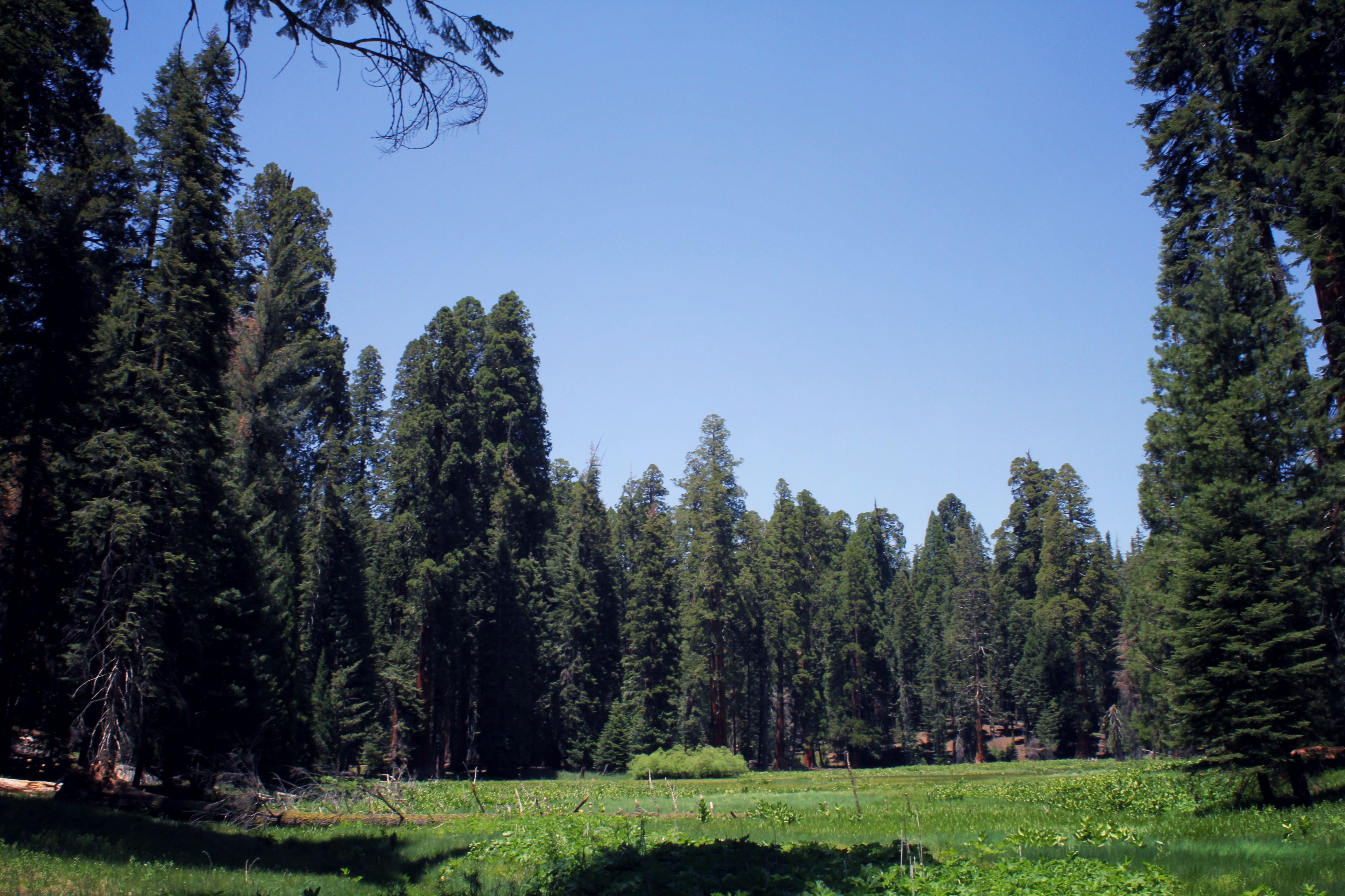 forest in at giant shan with national acne a on sequoia marvelling cabins teenage the img