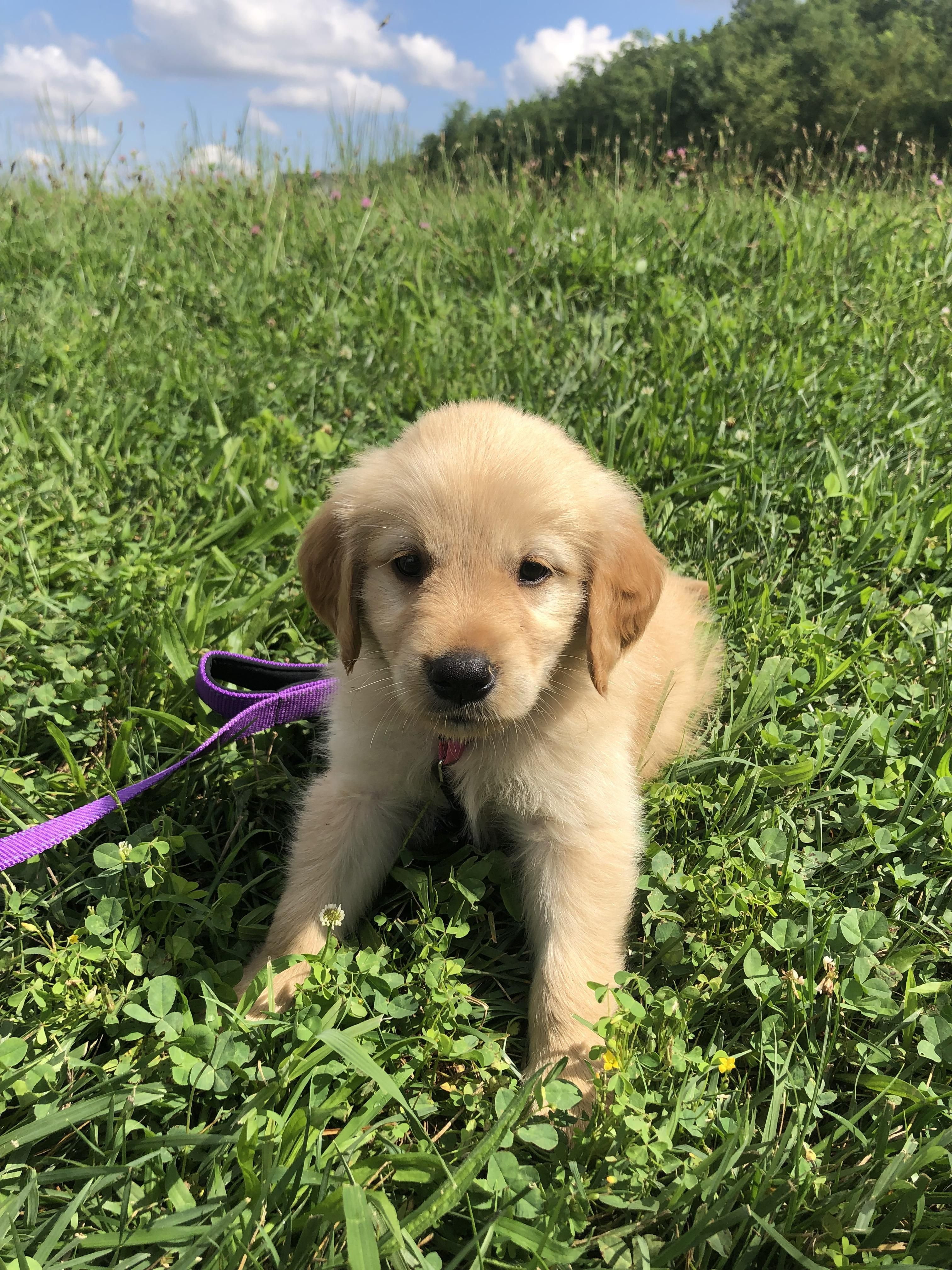 Sadie joined our family today!