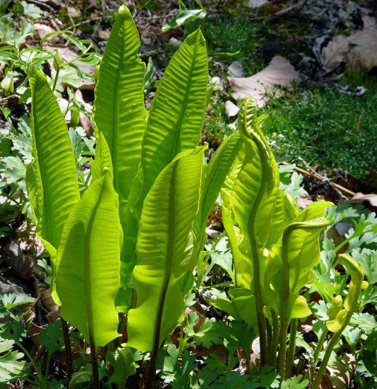 Plante foug re d ext rieur culture entretien et for Conseil sur les plantes