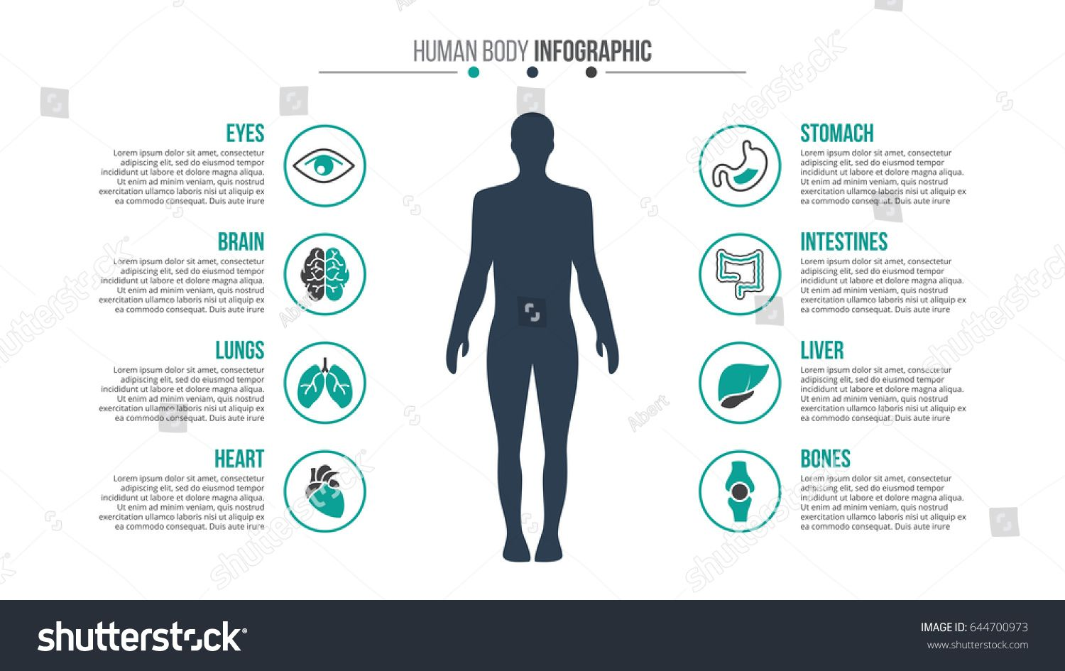 Vector human body infographic. Medical and healthcare
