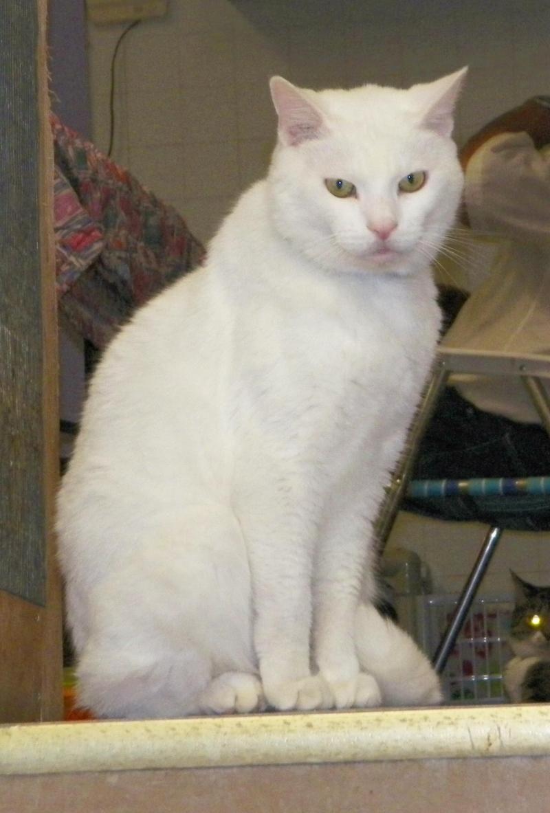 Adopt Blitz On Petfinder Adoption Pet Adoption Animals