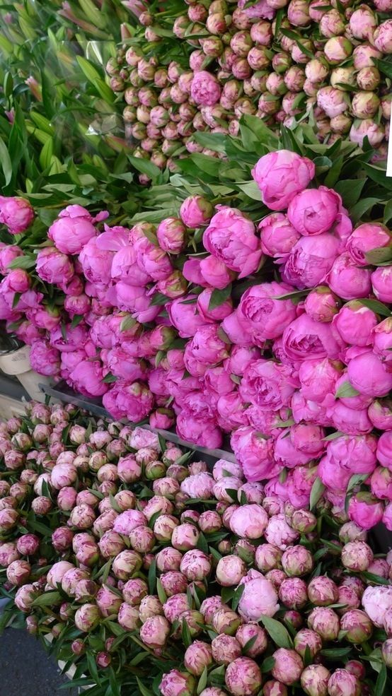 SHADES OF COTY 2014 - RADIANT ORCHID - Peonies in a French flower market #pink #peonies #beautyinthebag