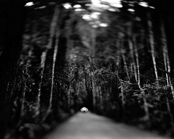 Floresta da Tijuca 2002 -- plate 15 : rio de janeiro 2001 : claudio edinger fine art photography