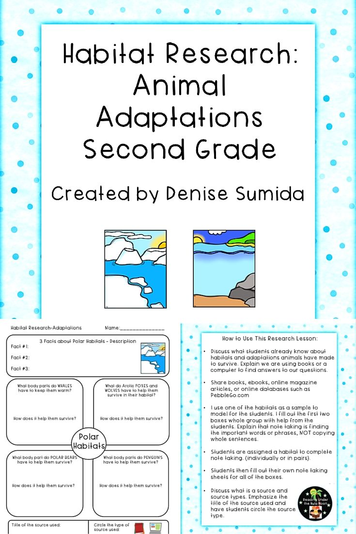 Second Grade Habitat Research - Animal Adaptations Worksheets   Animal  adaptations [ 1102 x 735 Pixel ]