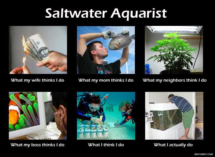 Saltwater Aquarist - What I really do | Reef aquarium, Saltwater tank,  Aquarium