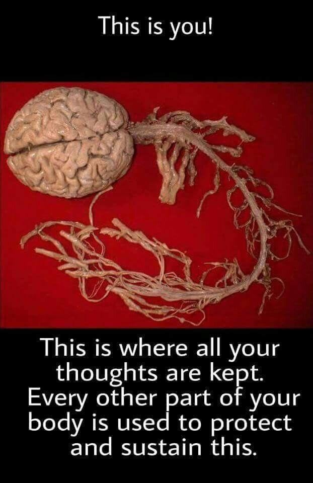 Pin de Ankan Paul en Yeah, science! | Pinterest | Medicina, Anatomía ...