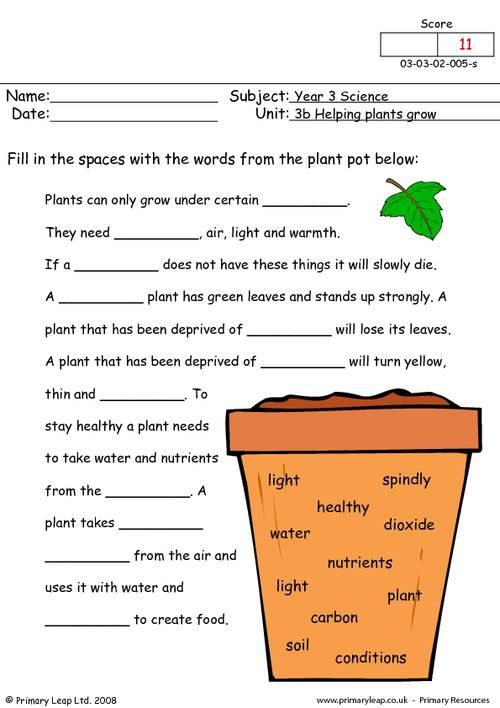 PrimaryLeapcouk How do plants grow Worksheet – Plant Worksheet