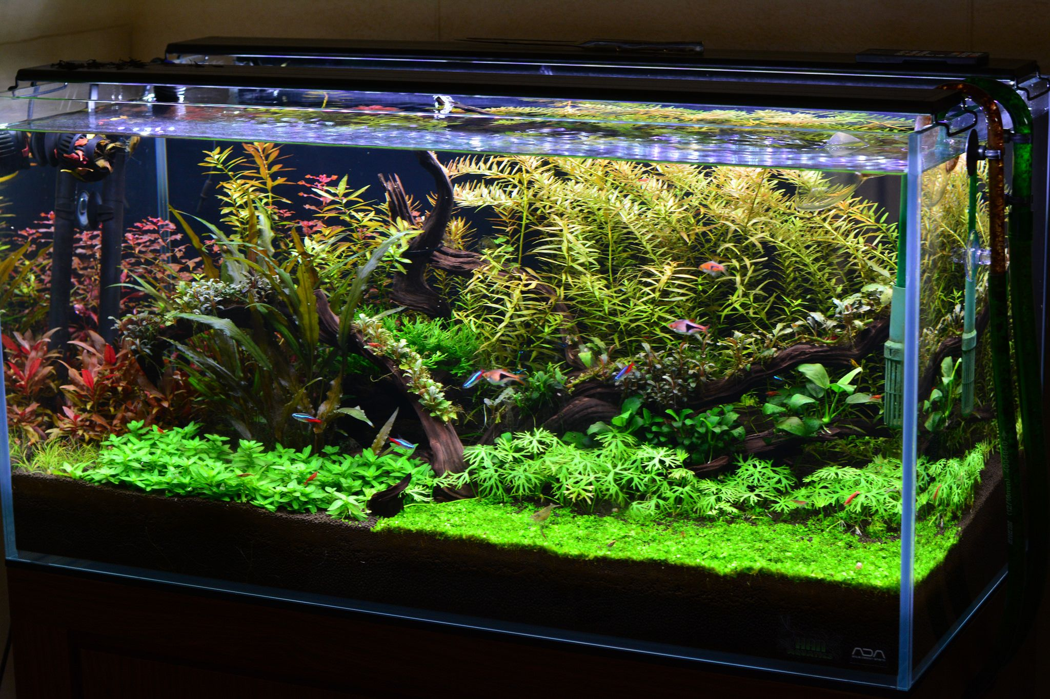 Low Tech Tank Show And Tell Low Tech Can Be Lush Too Page