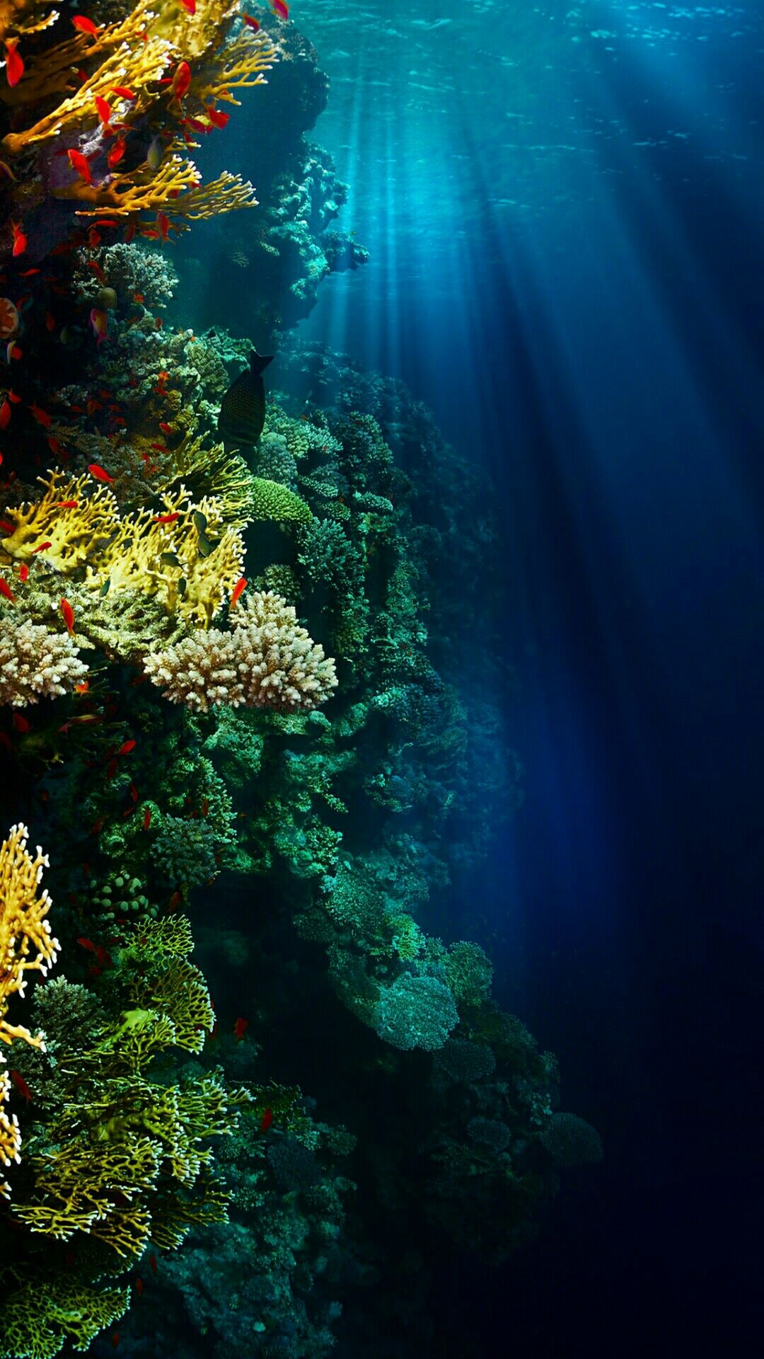 Underwater Wallpaper | *Beach, Island, Water and Rain Wallpapers in 2019 | Underwater wallpaper ...