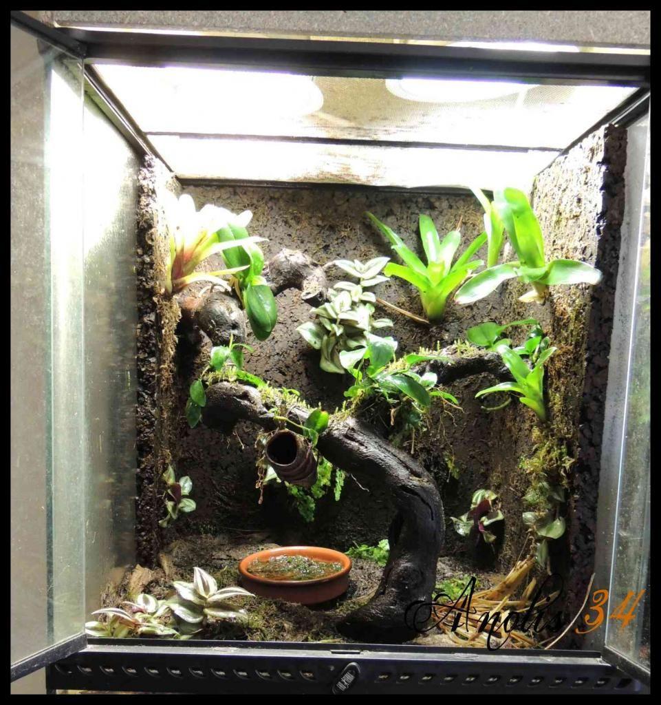 Un terrarium en liège