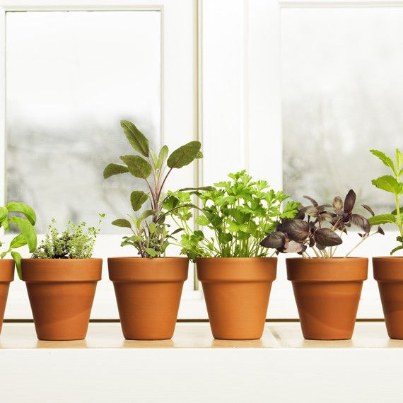 A Guide to Growing Kitchen Windowsill Herbs #outdoorherbgarden