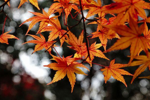 あの色 by sunnywinds*, via Flickr