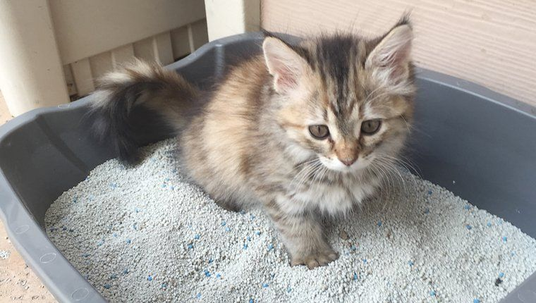 Kittens What To Expect 5 Essential Tips For When You Adopt Kittens Cat Pictures For Kids Cute Cat Wallpaper