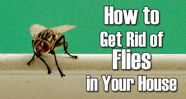 13 Natural Remedies To Get Rid Of Flies Housefly Get Rid Of