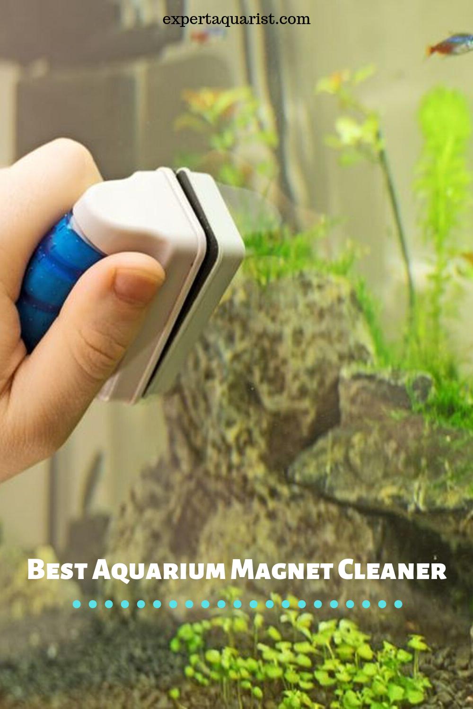 Best Aquarium Magnet Cleaner Top Pick Reviews Fish Tank Aquarium Fish Tank Saltwater Aquarium Fish