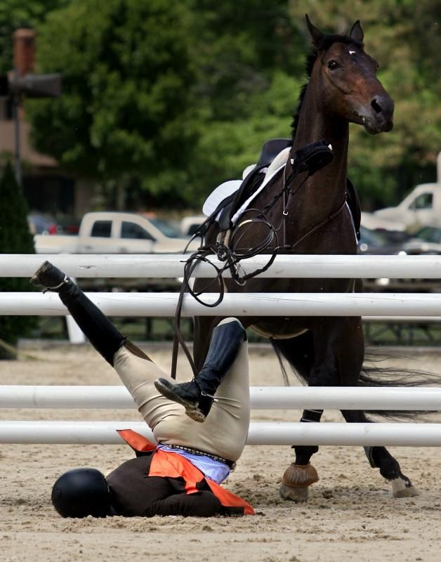 """""""Horseback riding is so easy!"""" Said no smart person ever. For real just made my day a little better! Been there,done that!"""