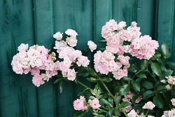 Flowers. Sweden.