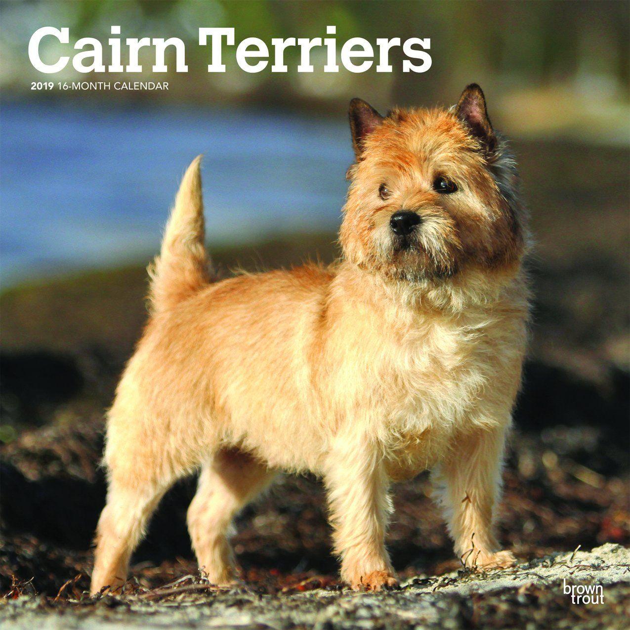 Cairn Terriers 2019 Wall Calendar Cairn Terrier Terrier Dog Breeds