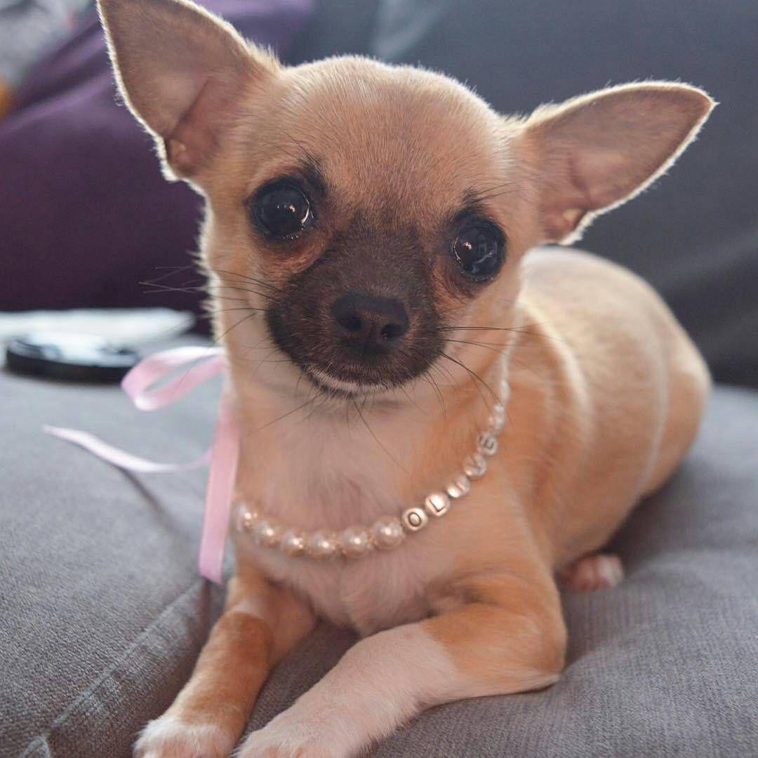 Ema elwyn jewelry on instagram look at this cutie
