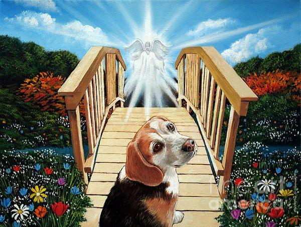 Come Walk With Me Over The Rainbow Bridge Rainbow Bridge Over