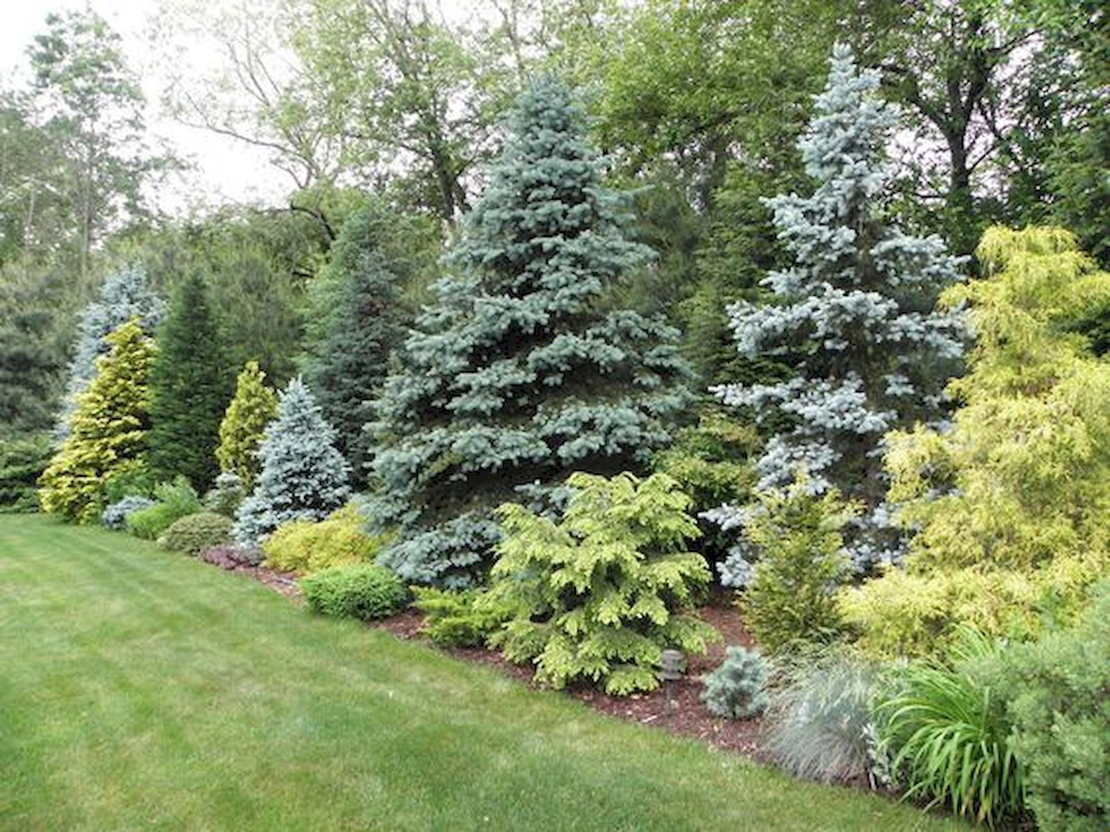 Beautiful Combo Of Colors And Textures Conifers Garden Garden