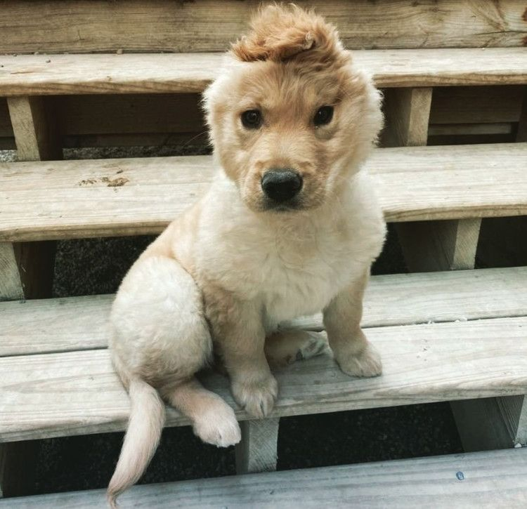Puppy Left With One Ear After Accident Transforms Into Instagram S