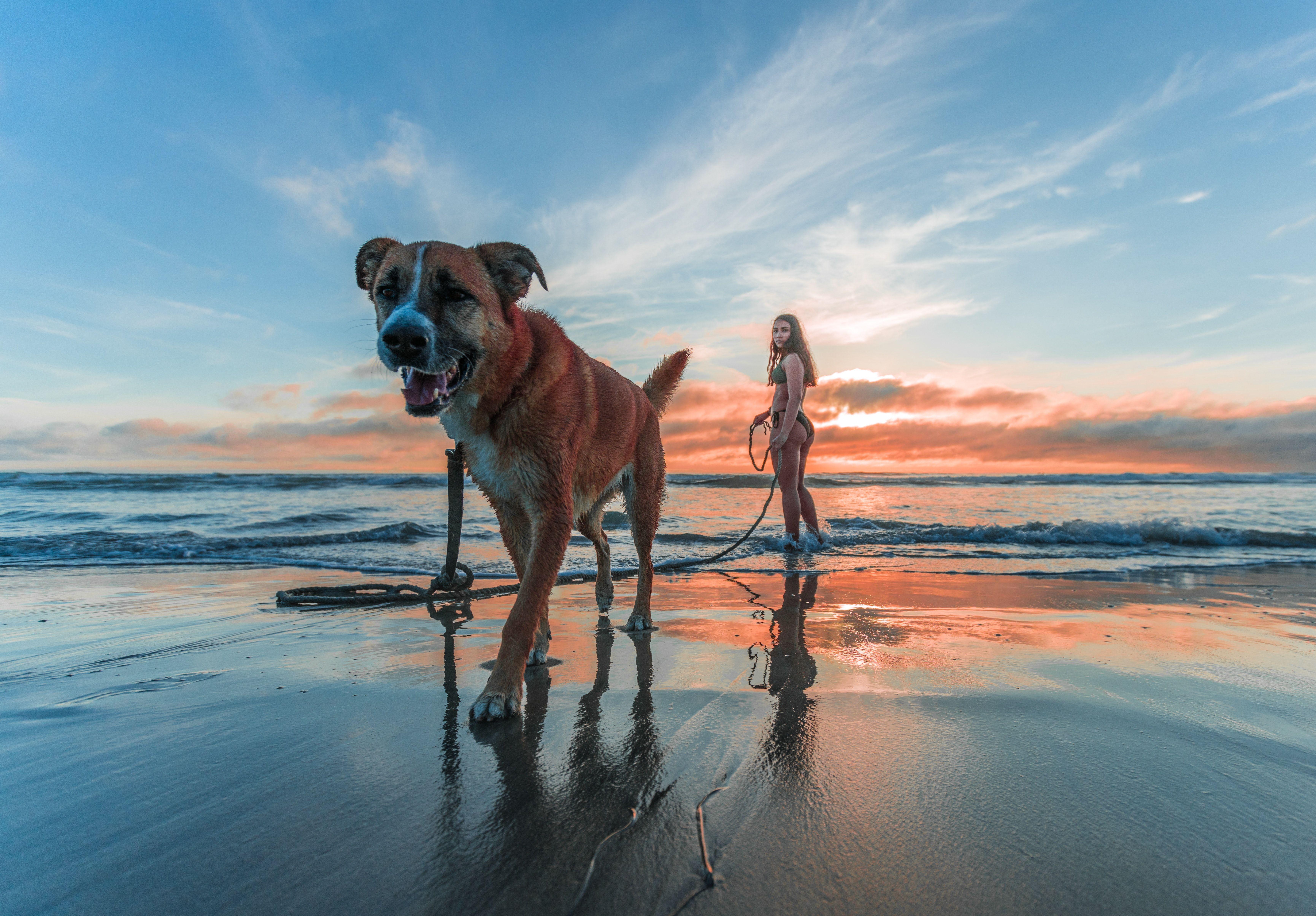 Categoria Diversion Y Viajes Quiero Mi Perro Dog Beach Dog