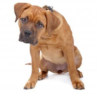 3 Disgusting Dog Habits – Explained! | The Dogington Post