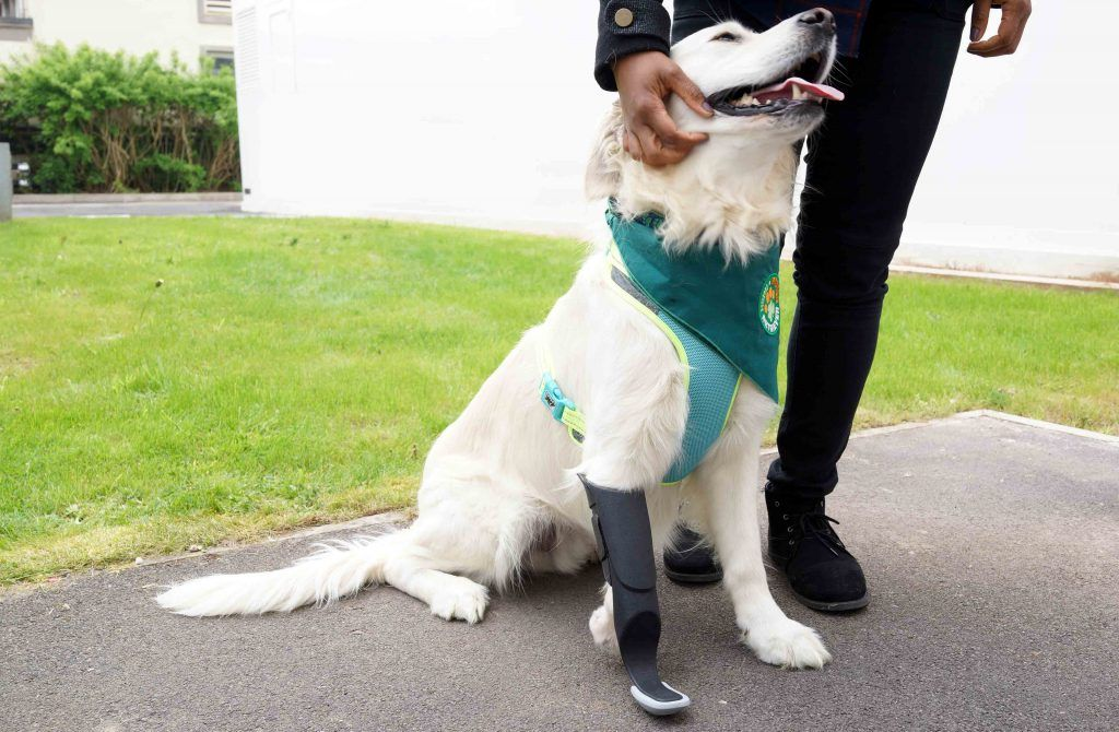 3d Printing Helps Lucky Dog Walk On All Four Legs Dogs Rescue Dogs Dog Walking