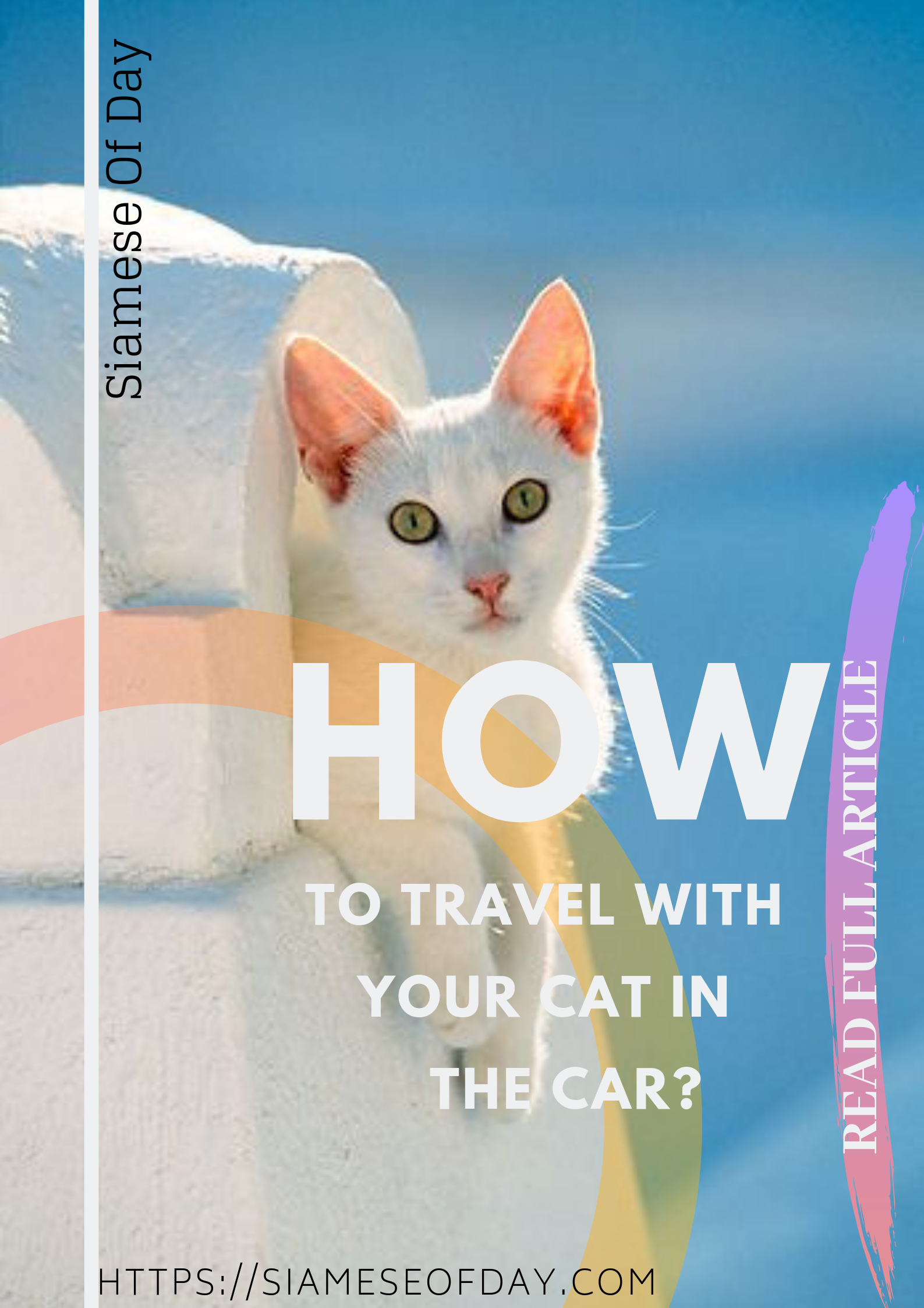 How To Travel With Your Cat In The Car Pet Travel Cat Travel Pets Cats