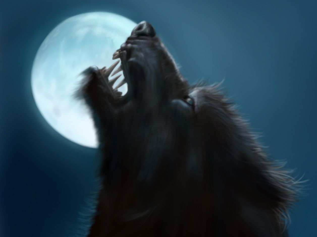 336 best images about Werewolves on Pinterest | Wolves, The beast ...