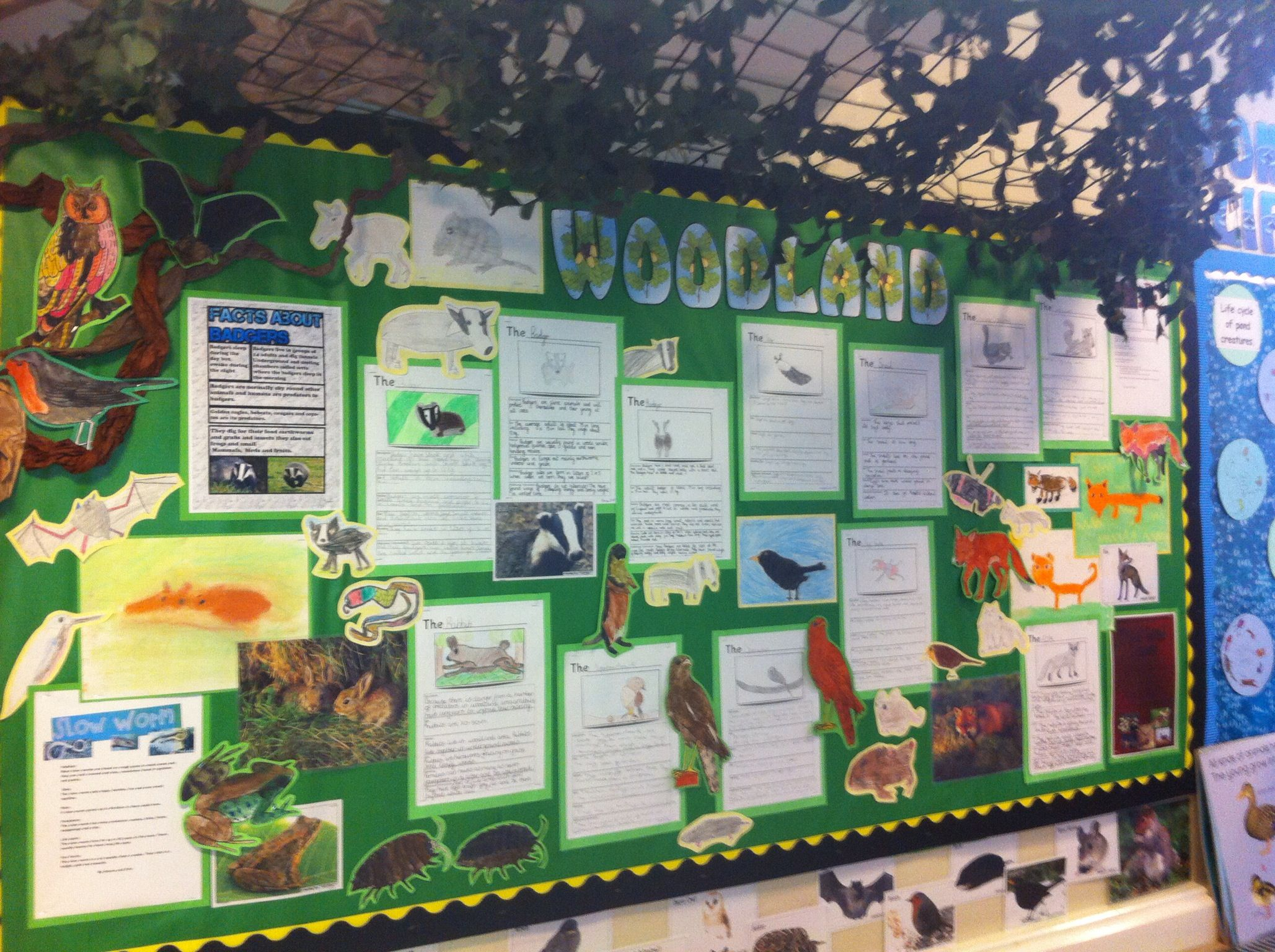 Woodland Ks2 Display