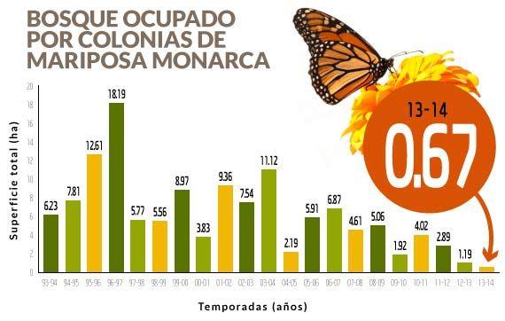 Por qué ya no llegan las mariposas monarca como hace 10 años al ...