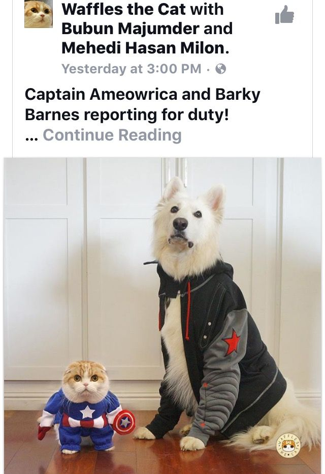 Captain America And Bucky Barnes Cat And Dog Costumes Captain America And Bucky Avengers Costumes Avengers Superheroes Get your courageous youngster ready for epic adventures as one of the universe's most powerful heroes in this awesome costume inspired by marvel's captain marvel. captain america and bucky barnes cat