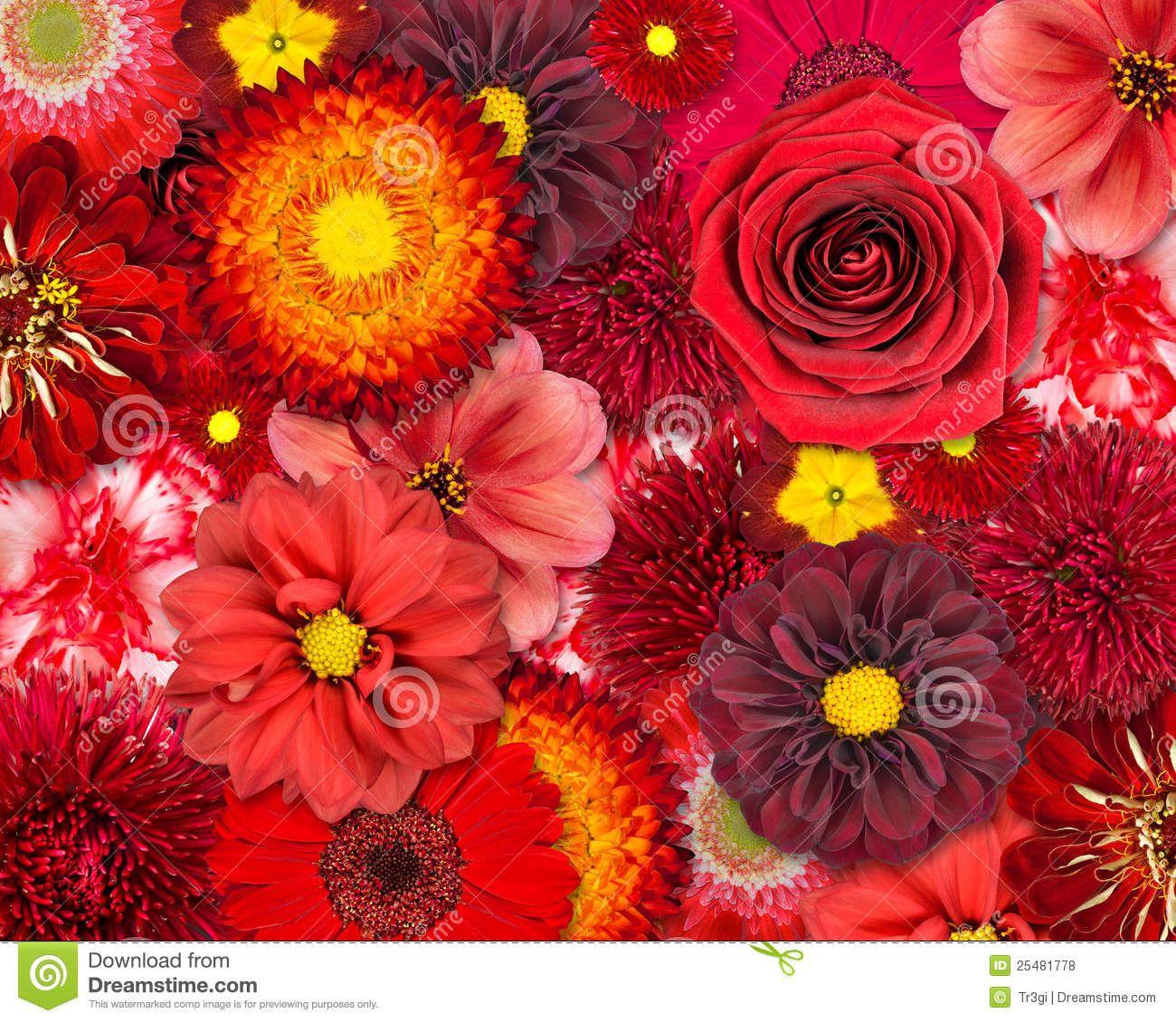 Red Flower Background Flower backgrounds, Flower stock