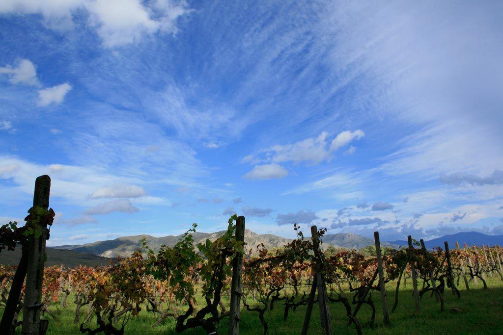 Etna Wine Tour Weekend Wine Tour Etna Tours