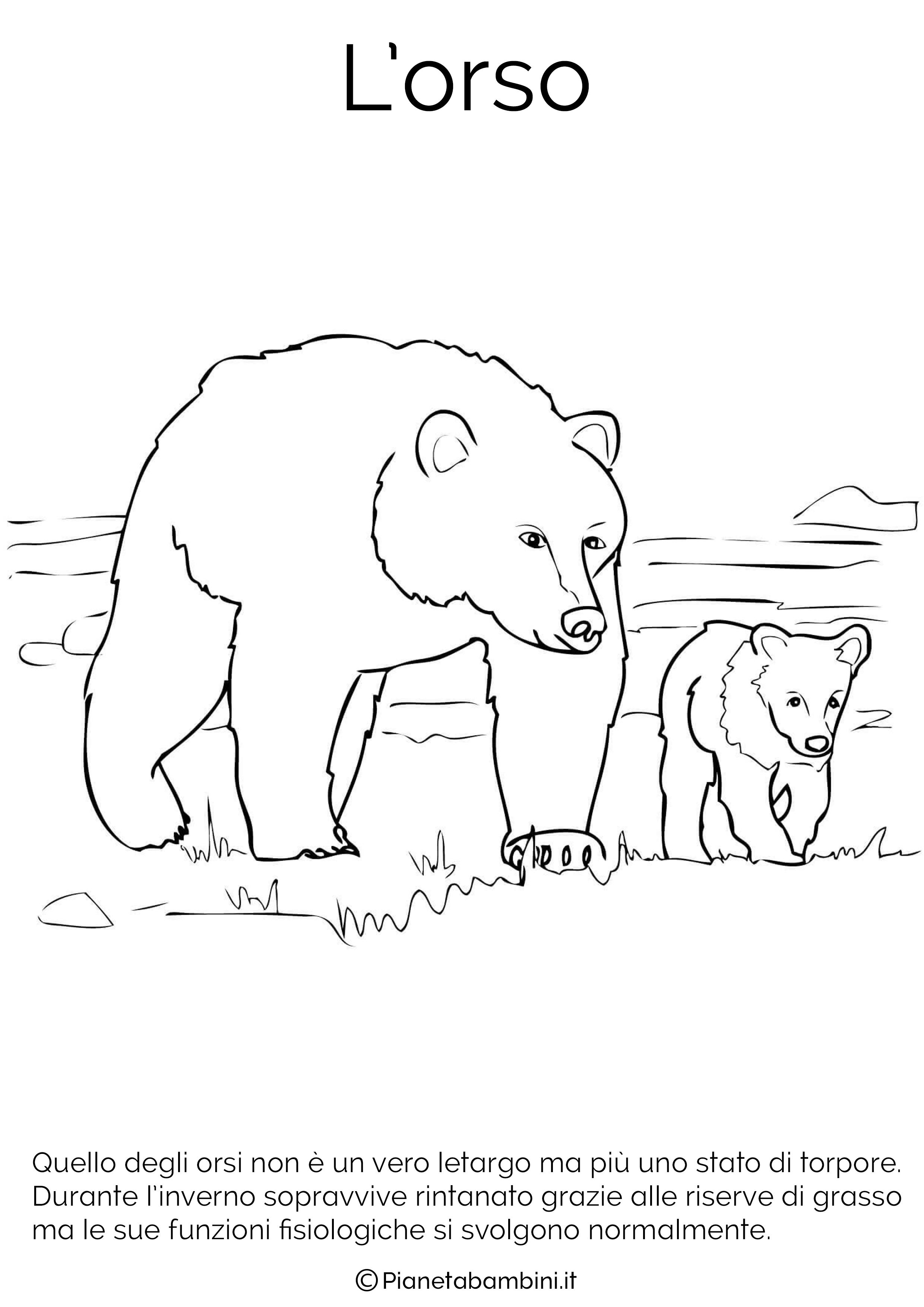 Disegni Di Animali Che Vanno In Letargo Da Colorare Disegnare Animali Disegni Di Uccelli Animali