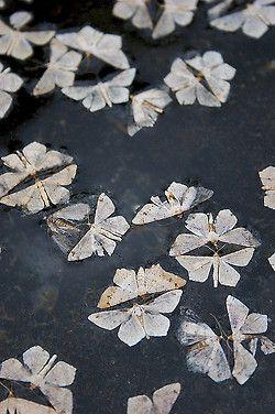 mizisham:  picture-22 by BenjaminWynn on Flickr.