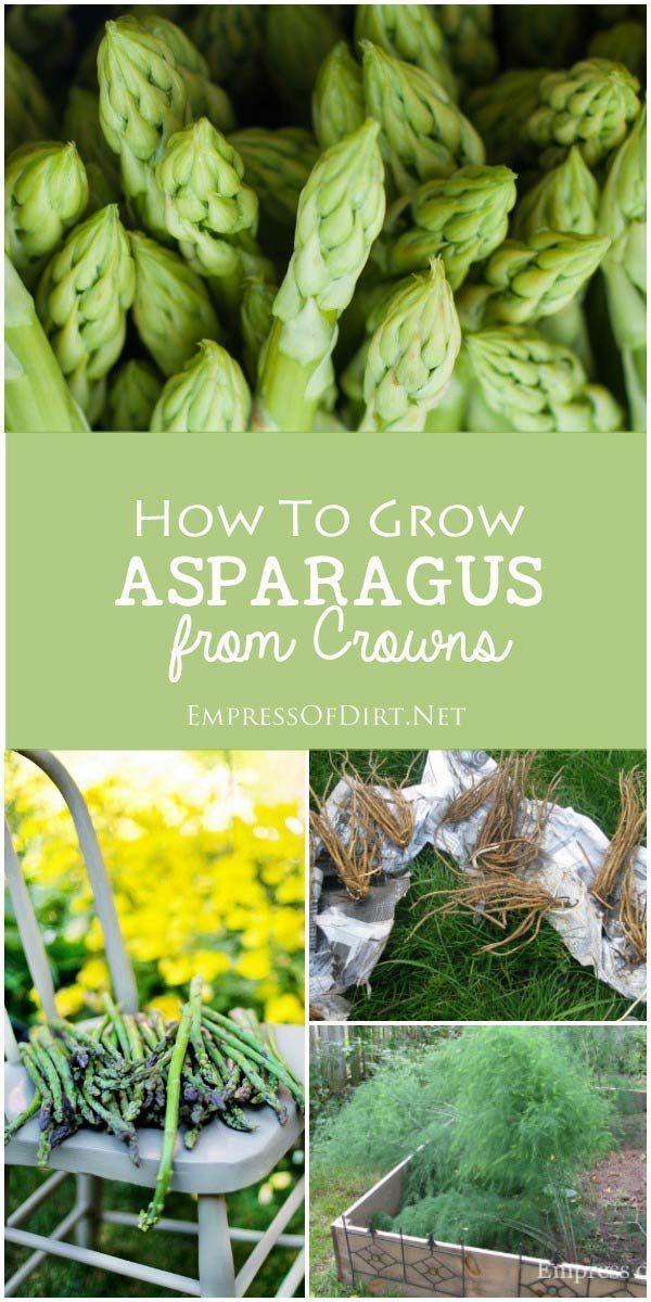 green garden - Vegetable Garden Ideas For Spring
