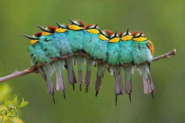 Colorful Birds kirzby