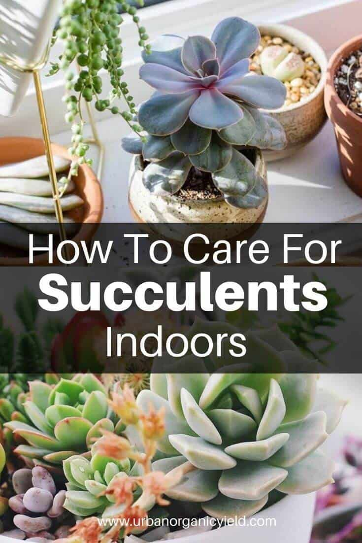 How to care for succulents indoors a beginners guide in