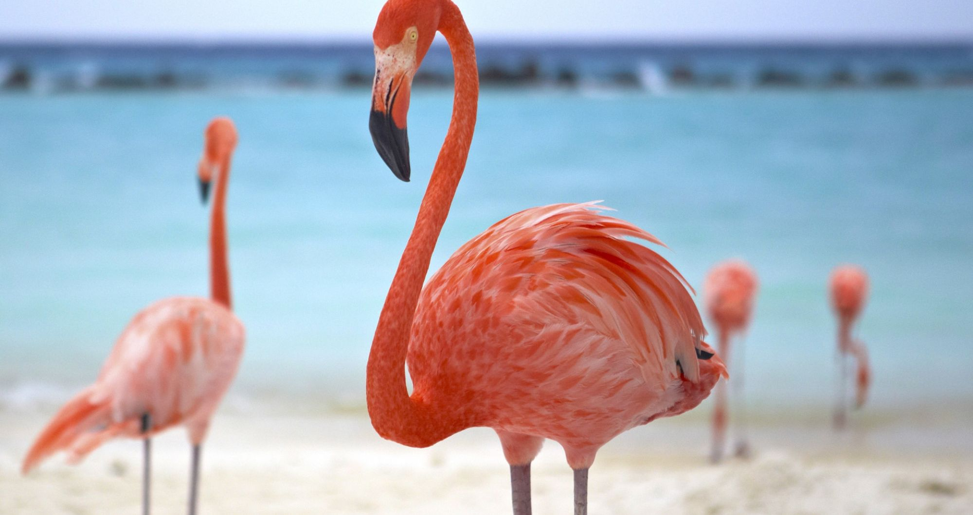Flamingos Beach at Renaissance Island Aruba