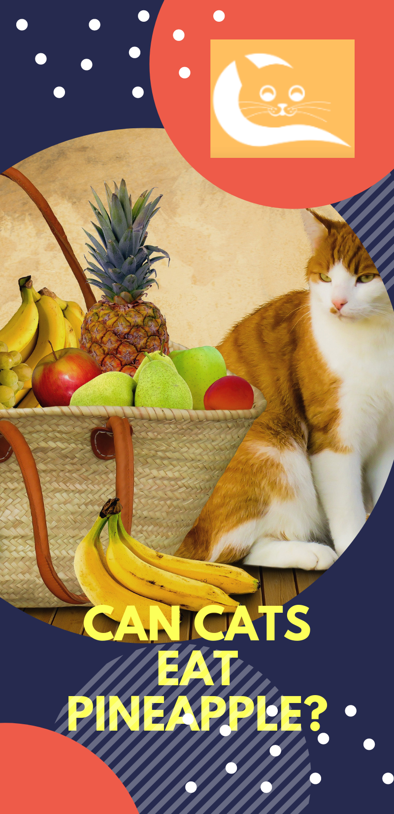 Can Cats Eat Pineapple Wellness cat food, Pineapple