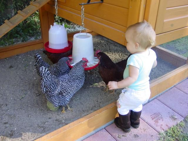 Upside Down Shelf Brackets To Hang Feeder And Waterer Chickens Backyard Best Egg Laying Chickens Chickens
