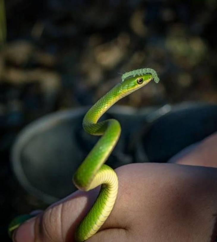 Счастливая змея фото