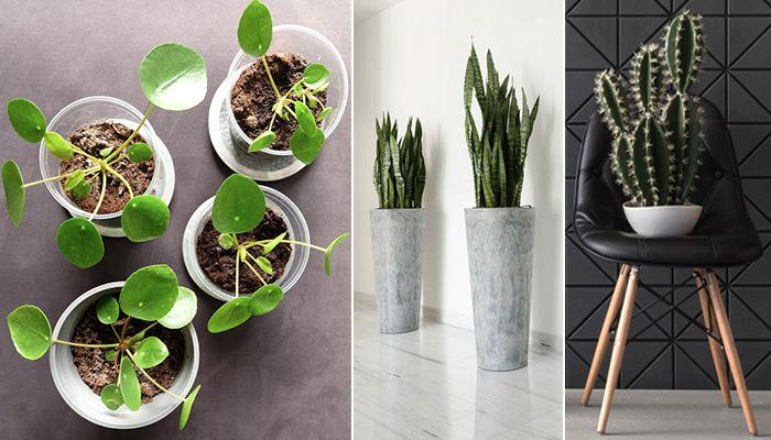 6 växter som överlever höstmörkret